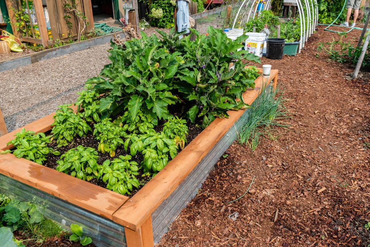 A raised bed complete with successful plantings.