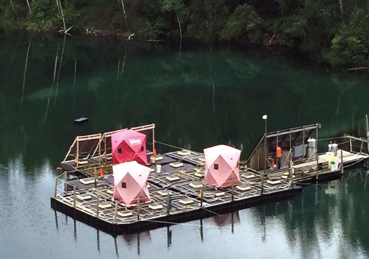 South view 3 rafts 6-16.JPG