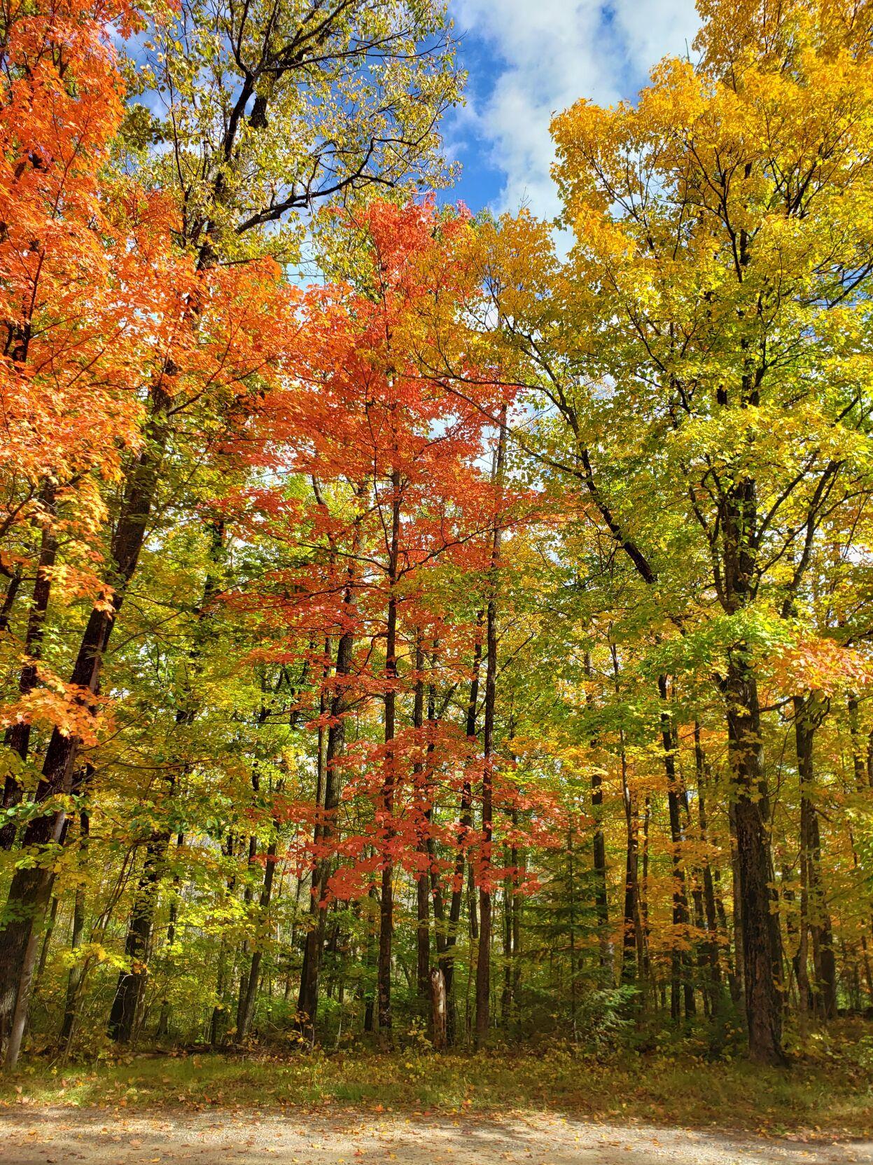 Fall colors 02