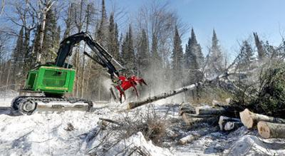 Logging industry in limbo