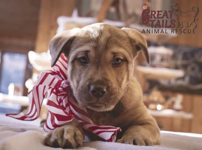 Great Tails Animal Rescue could use your help