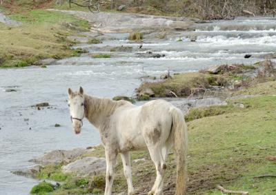 Horse at Sinking Creek