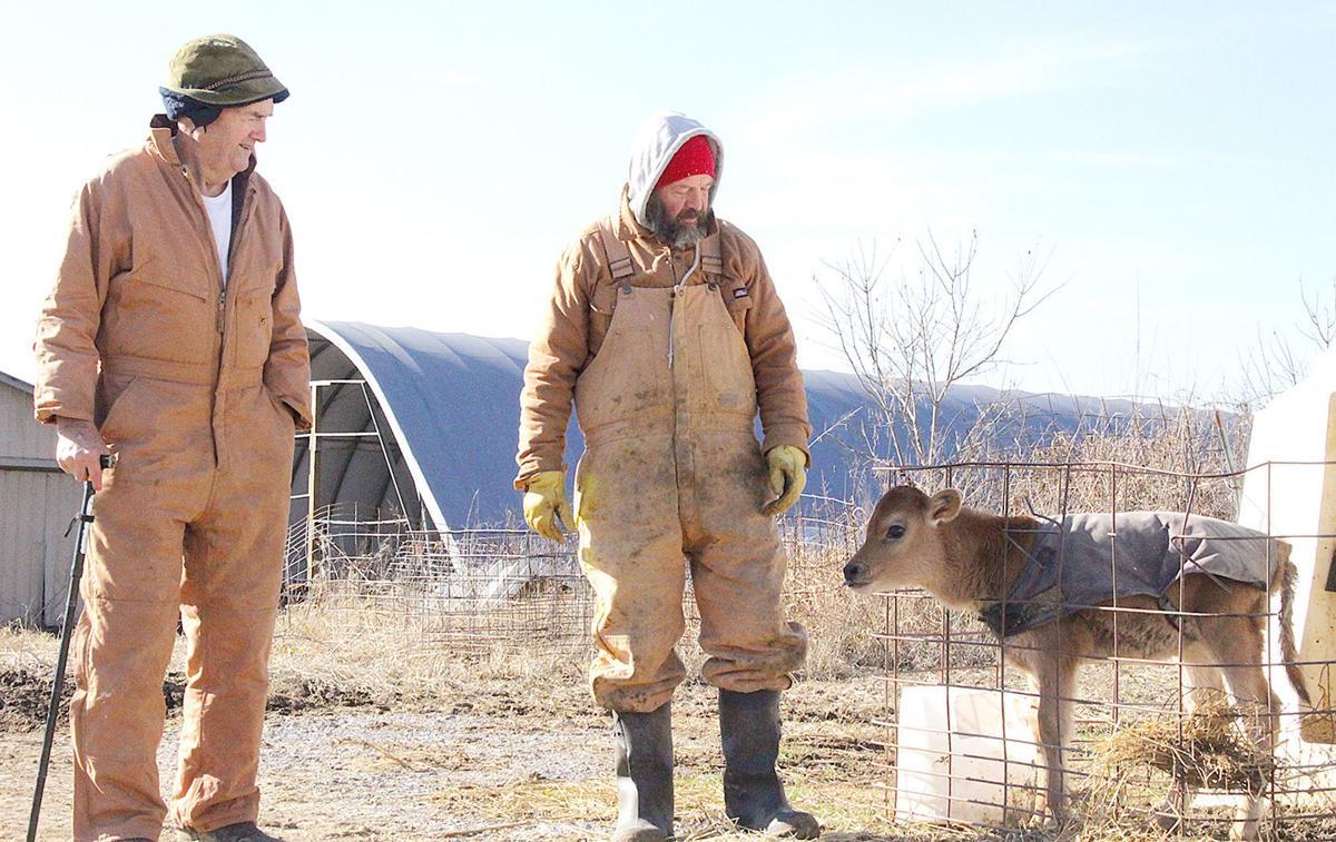 Surveying Calves