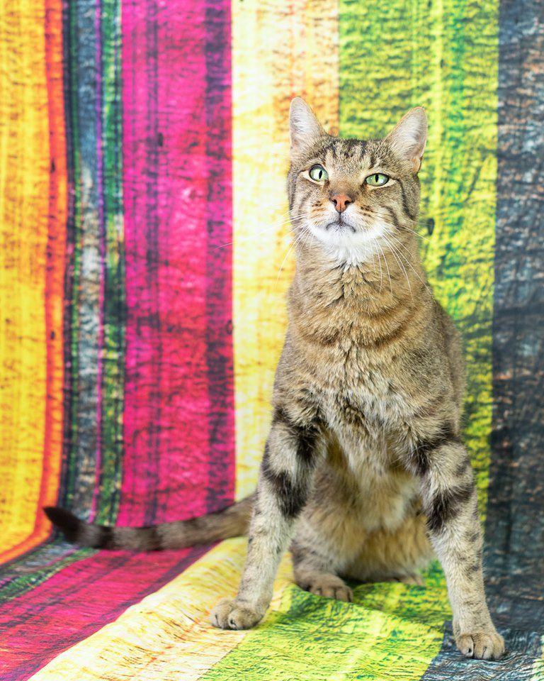 Alley Cat no logo.jpg