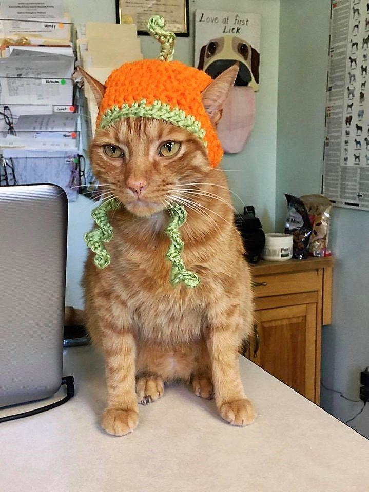 Vernon pumpkin hat.jpg