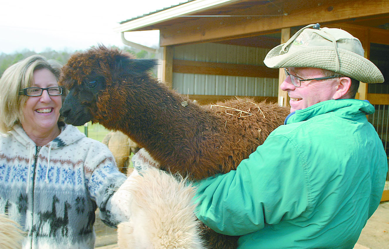 alpaca 1