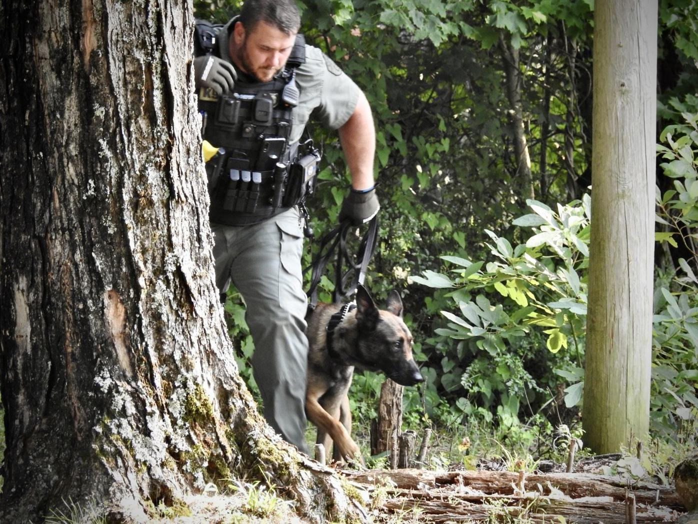 K-9 Officer And Dog Search For Fugitive