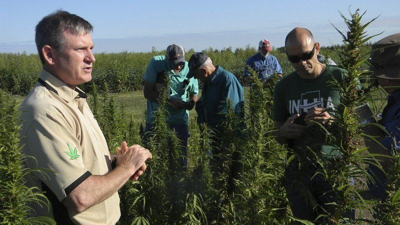 Seed bill inches state closer to hemp production