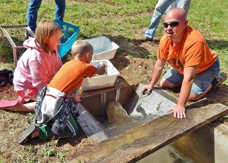 Wenning shrimp harvest good, muddy family fun | Local News