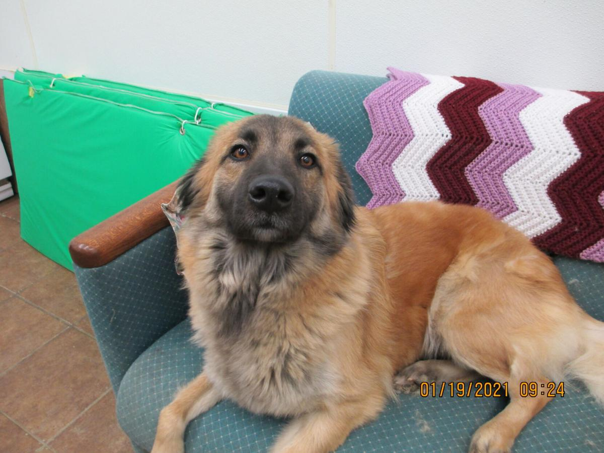 Ripley County Humane Society Pet of the Month