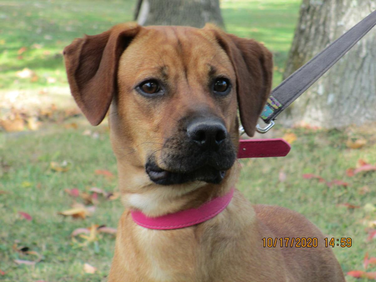 """Ripley County Humane Society """"Pet of the Month"""""""