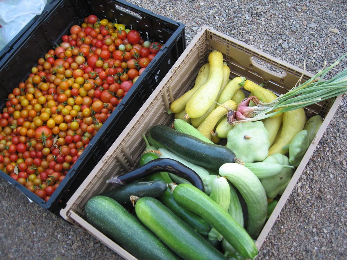 GV Gardenders: Volunteers producing summer's fresh produce
