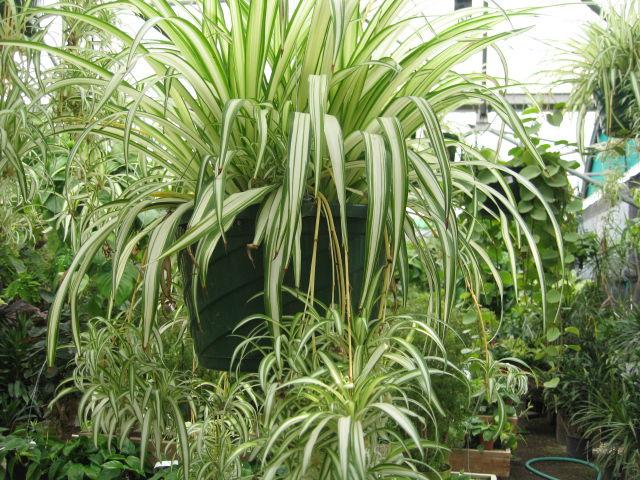 GV Gardeners: Houseplants to provide winter greenery