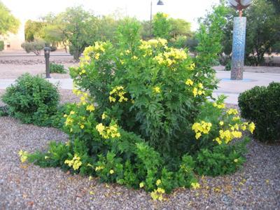 GV Gardeners: Summer tips for protecting new plants