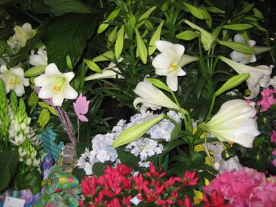 Gv Gardeners Lovely Easter Lilies Symbols Of Purity Hope Get