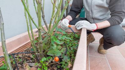 Rosie on the House: Irrigation maintenance ensures greener grass