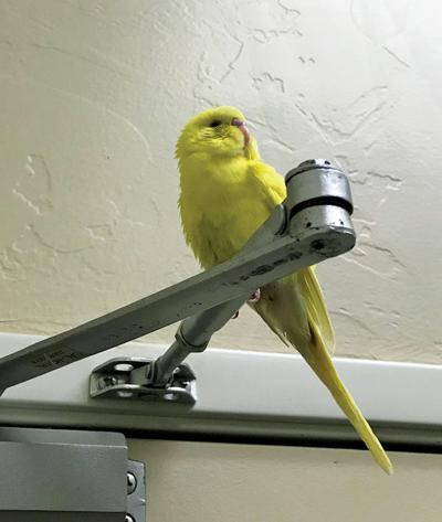 Bird Friend