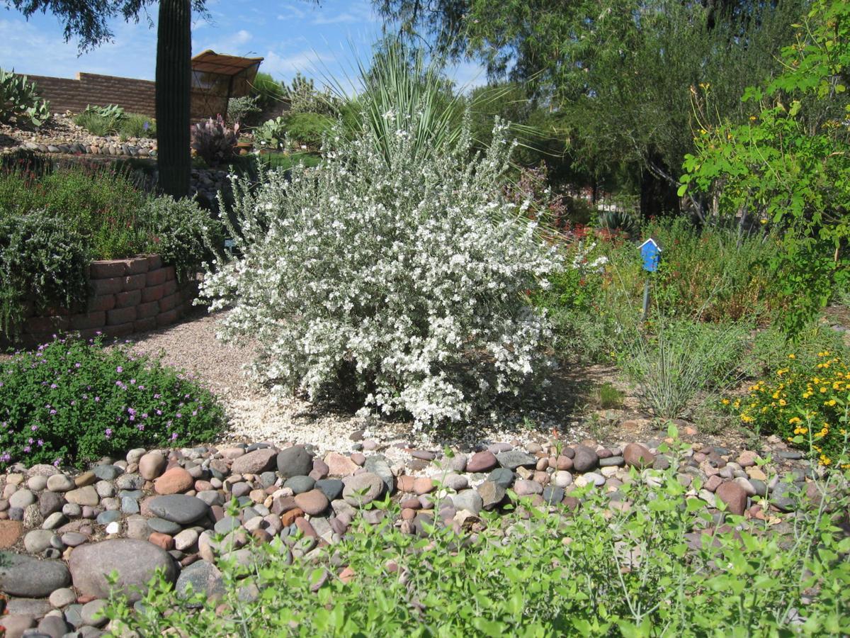 GV Gardeners: Lovely delights in the summer garden