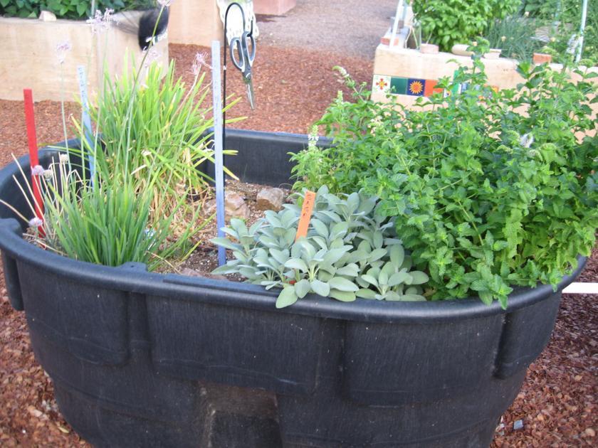 GV Gardeners: Cool season herbs in the kitchen garden