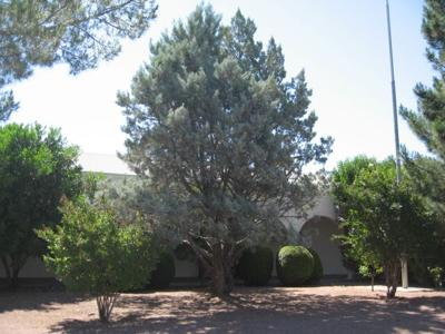 GV Gardeners: Can conifers thrive in the desert?