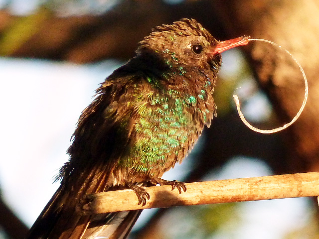 Hidden dangers: Woman out to protect hummingbirds | Local