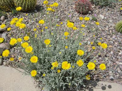 GV Gardeners: Gray gardens suited to the desert