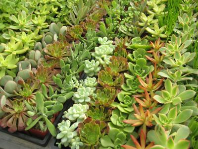 GV Gardeners: It's Plant Sale time in Green Valley