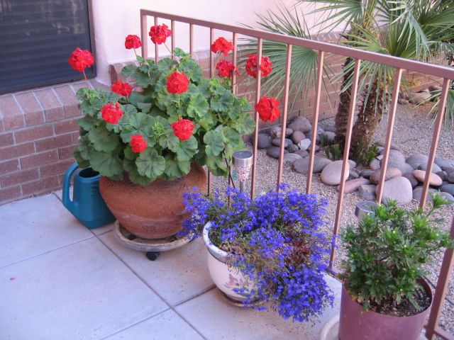 GV Gardeners: Choose A Container Garden For Small Spaces