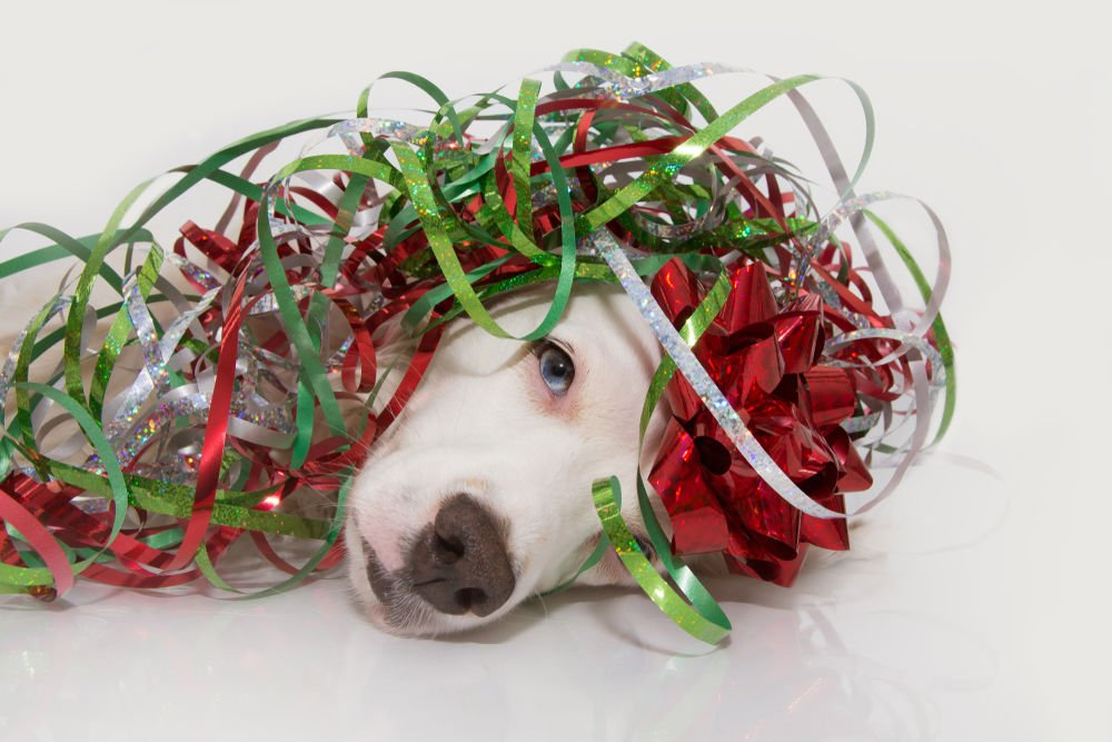 Rosie on the House: Pet safety during the holidays