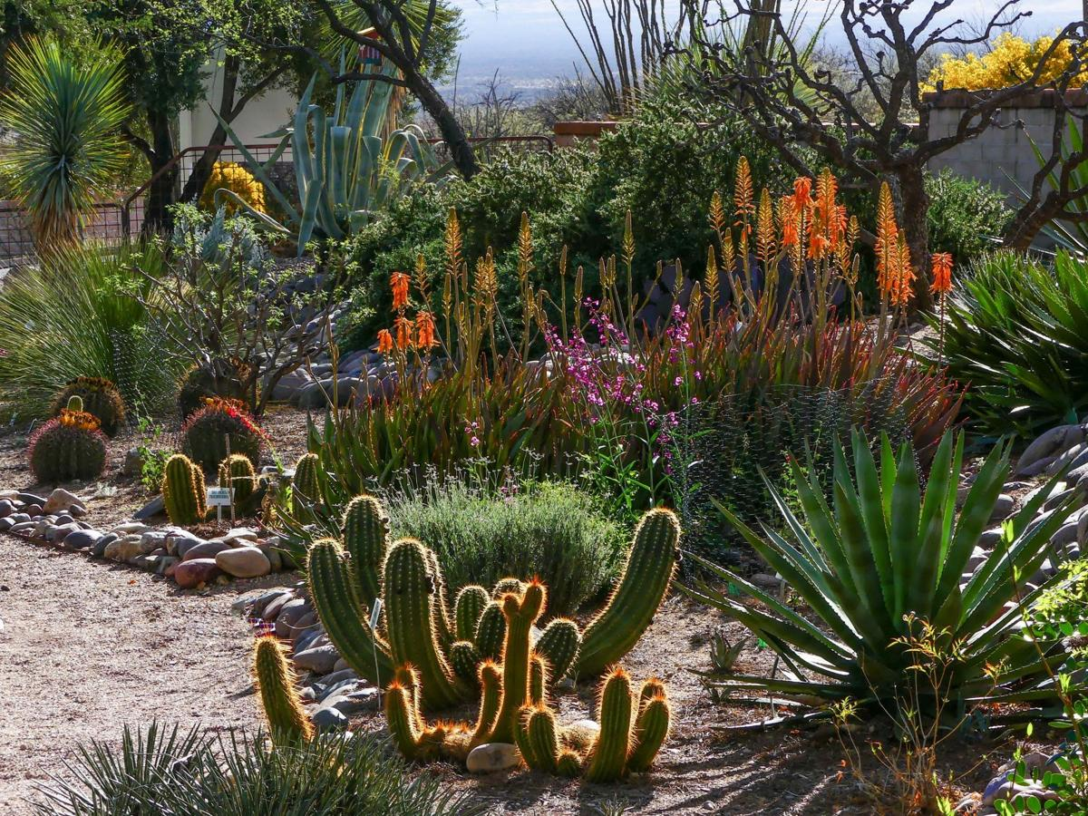 BOTANICAL OASIS: Green Valley\'s Arid Garden full of life | Get Out ...