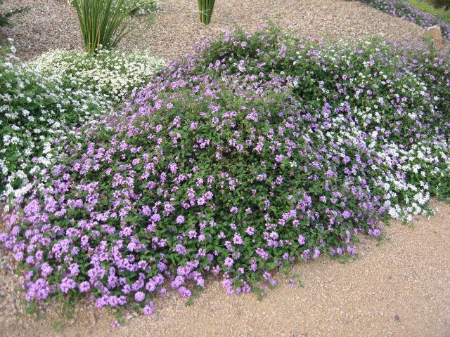 GV Gardeners: Color combinations for summer gardens