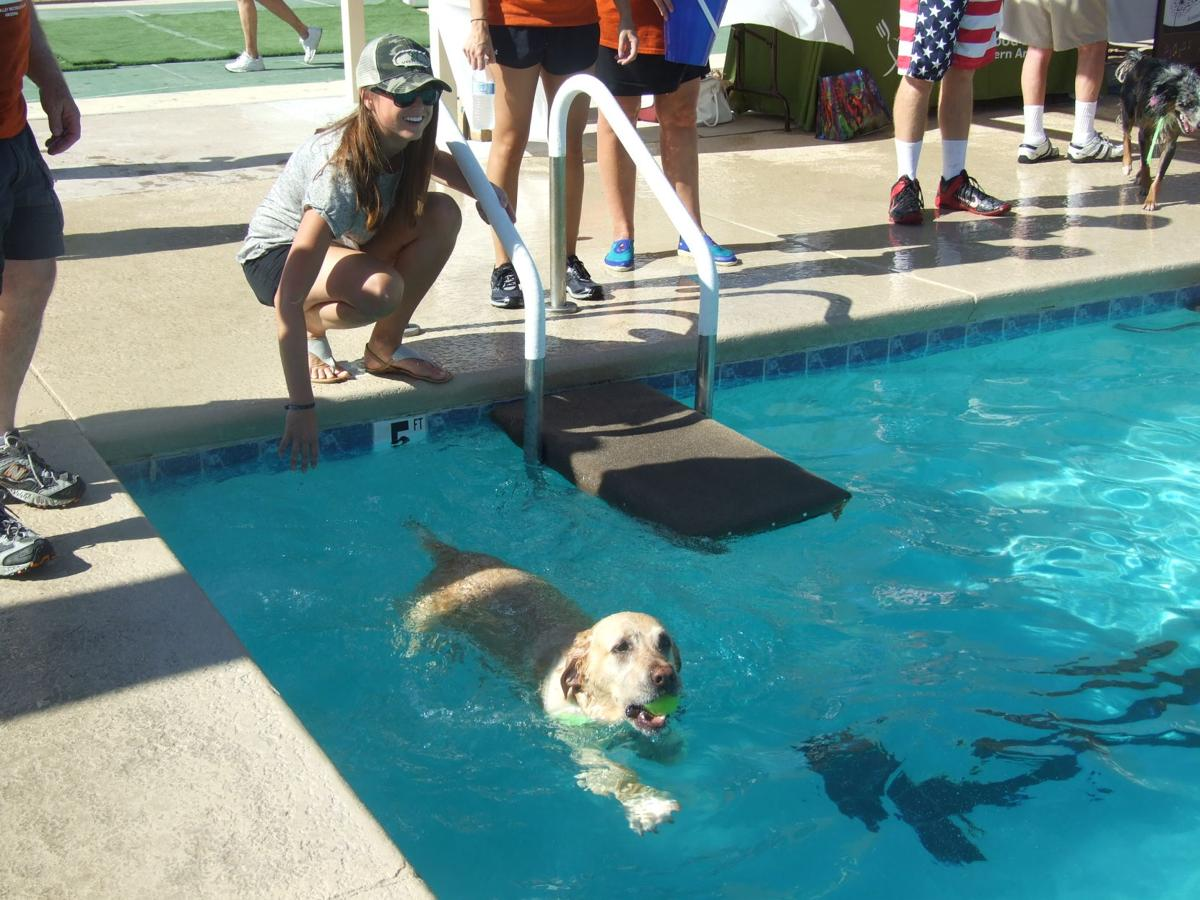 Paws in the Pool