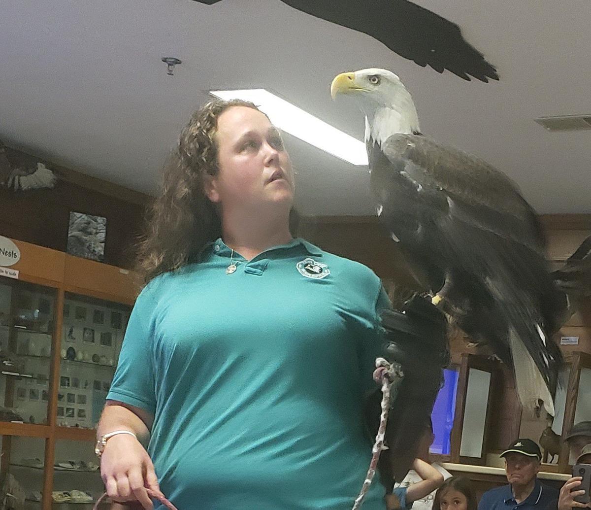 Hawk Creek Bald Eagle, Gryphon