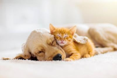 Cat and Dog Generic 1