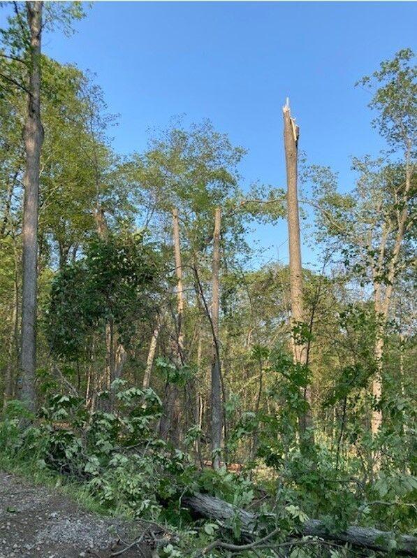 Downed tree courtesy of Springwater tornado!