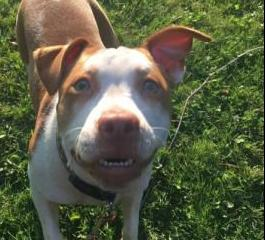Pet of the Week 6.8.18 - Daisy