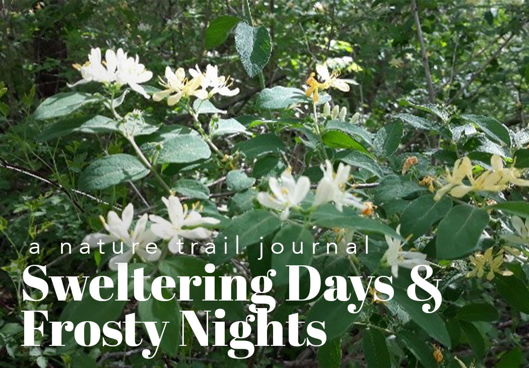 A Nature Trail Journal: Sweltering Days & Frosty Nights