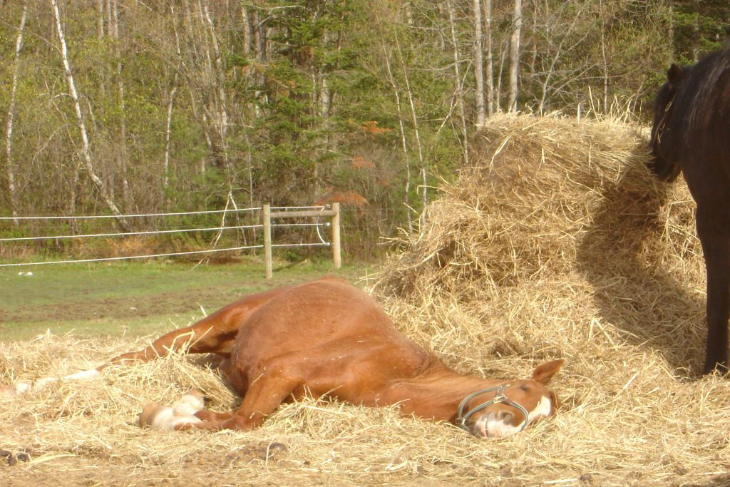 Hometown Auto Sales >> Did you know horses sleep lying down? | Hometown Stories ...