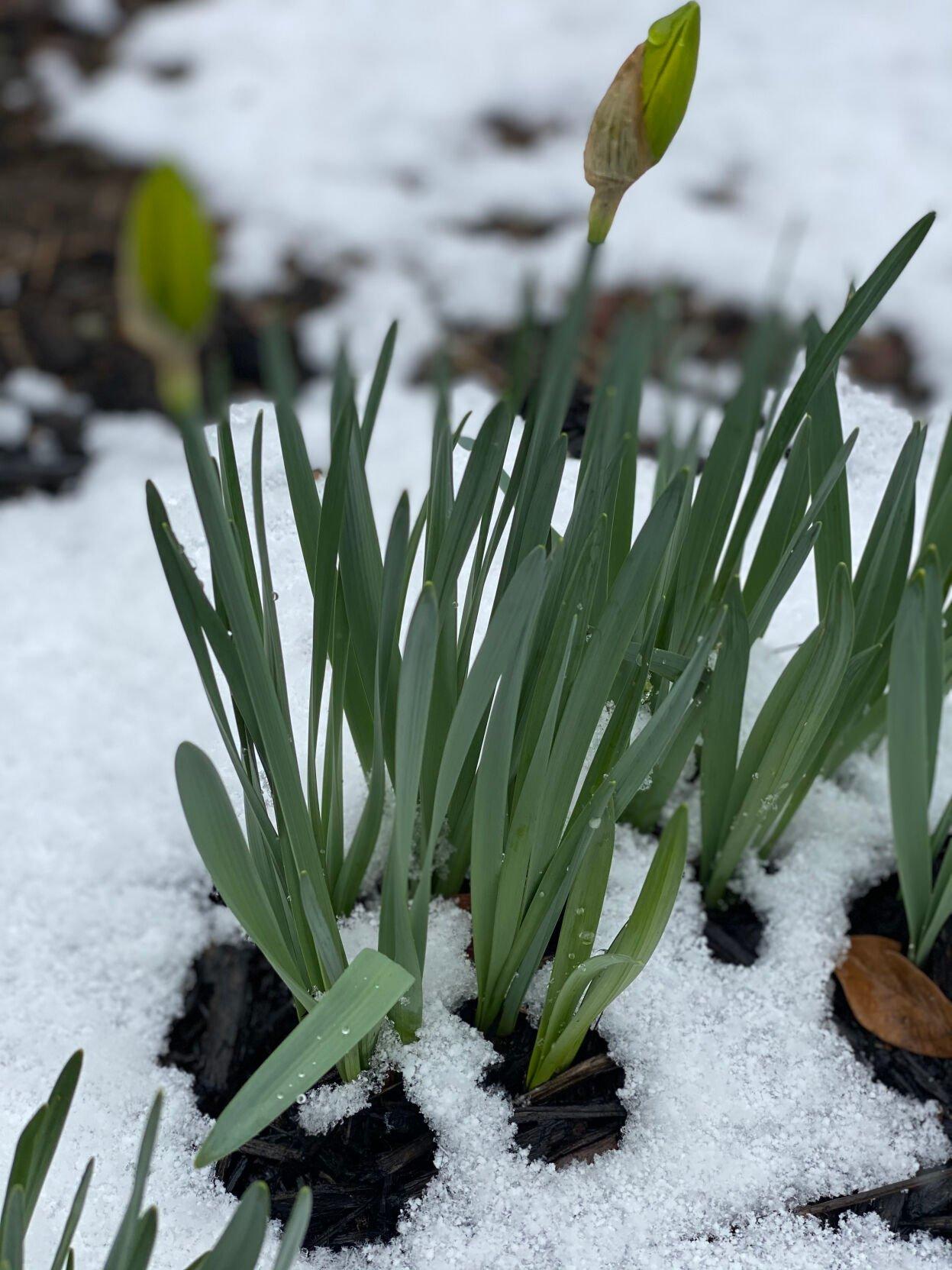 Winter's last attempt!