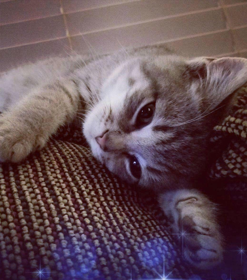 Pet of the Week 01.29.21 Papi