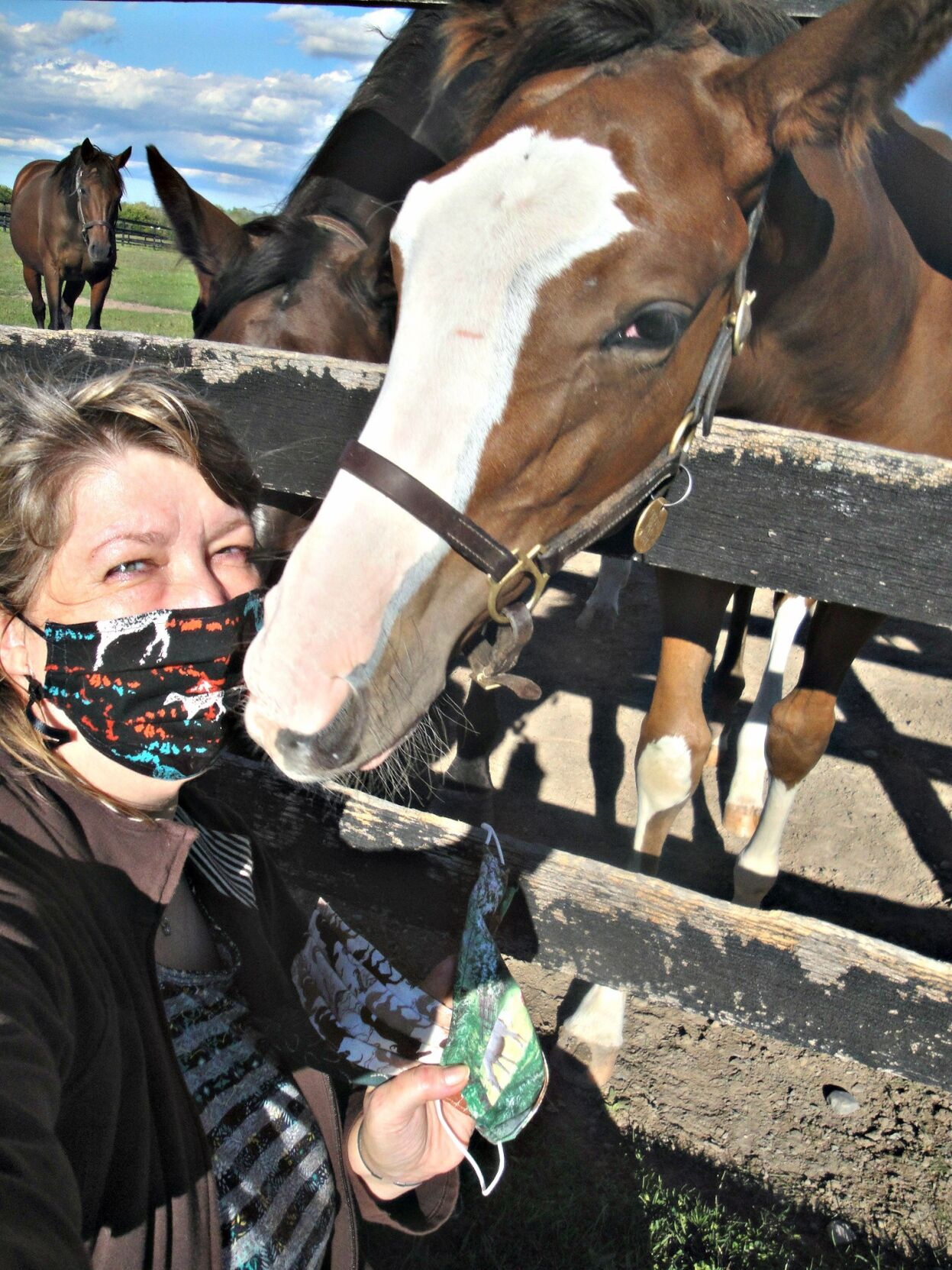Elizabeth Hendy Masks a five-month-old thoroughbred