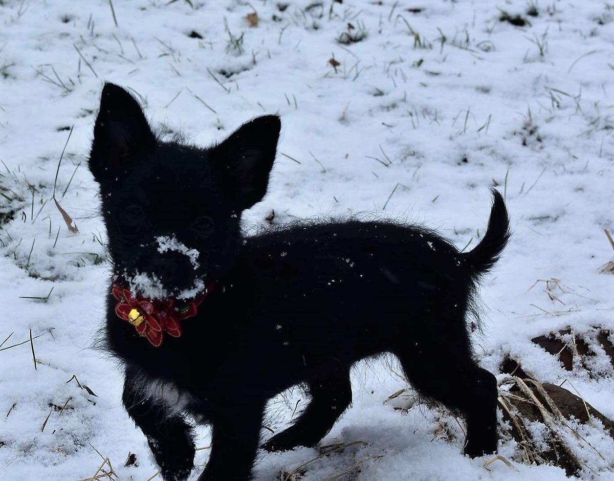 Pet of the Week 12.06.19 Lexi