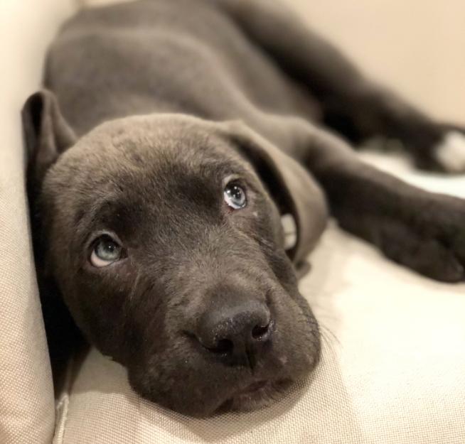 Pet of the Week - 6/15/18 - Bruin