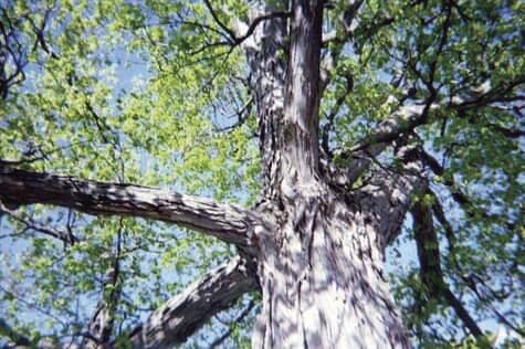 10.22.21 Tree trunk