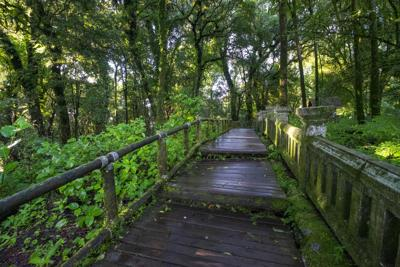 A Nature Trail Journal: Enjoying the Ever-Changing Landscape