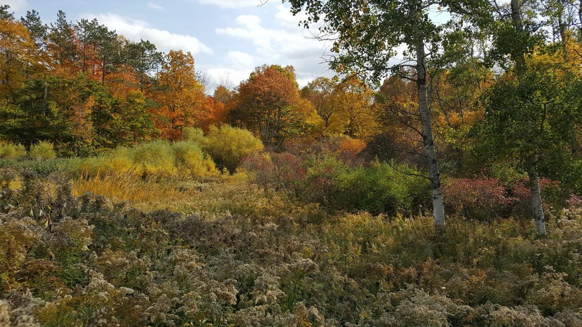 Genesee County Woodlands