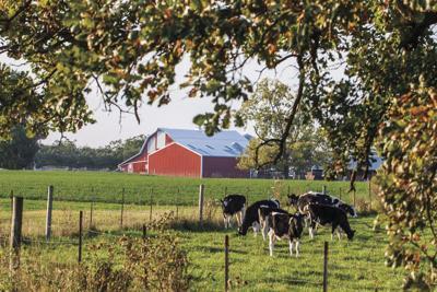 Farm Through Trees Generic