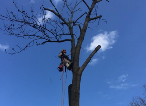 Old Skool Tree Care