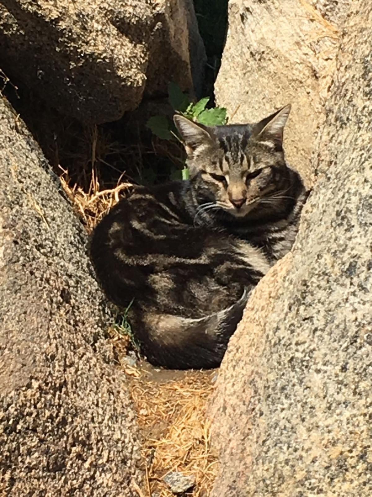 dr kait cats