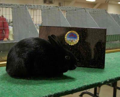 Central Valley Rabbit Breeders Association hosting event